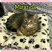 Adopt A Pet :: Miranda - Atco, NJ
