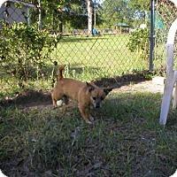 Adopt A Pet :: 0961 Troy - Jacksonville, FL