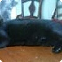 Adopt A Pet :: Austin - Little Rock, AR