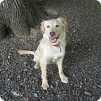Adopt A Pet :: MacCullough - Eden, NC