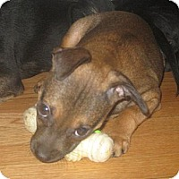 Adopt A Pet :: Wilma(ADOPTED!) - Chicago, IL