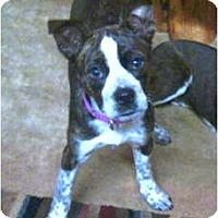 Adopt A Pet :: SKY and Hawk TN - Wakefield, RI
