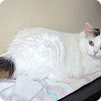 Adopt A Pet :: Linda - Xenia, OH
