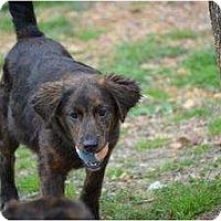 Adopt A Pet :: Morgan - New Boston, NH