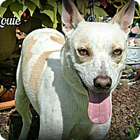 Adopt A Pet :: Louie - Vancleave, MS
