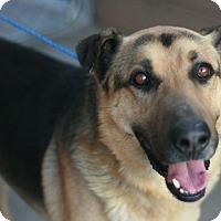 Adopt A Pet :: Phoenix - Canoga Park, CA