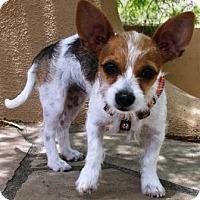 Adopt A Pet :: Zazu - Gilbert, AZ