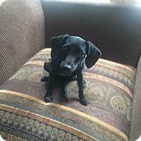 Adopt A Pet :: HOLLY - Boca Raton, FL
