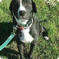 Adopt A Pet :: Maggie - Lawrenceburg, TN