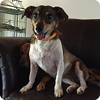 Dachshund Mix Dog for adoption in Hohenwald, Tennessee - AJ