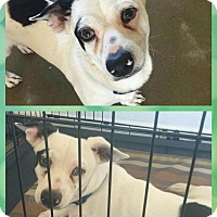 Adopt A Pet :: Graham - Scottsdale, AZ