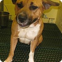 Adopt A Pet :: Jane - Gary, IN