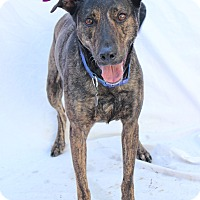 Mixed Breed (Large) Mix Dog for adoption in Bradenton, Florida - Lily