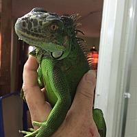 Adopt A Pet :: Chappie - St. Paul, MN