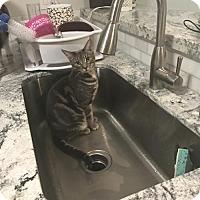 Adopt A Pet :: zz - Sarai (courtesy posting) - West Palm Beach, FL