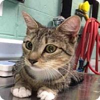 Adopt A Pet :: Tori - New York, NY