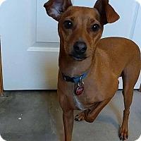 Adopt A Pet :: Major - Lehigh Acres, FL