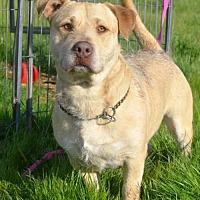 Adopt A Pet :: Cappy - Vacaville, CA