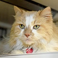 Adopt A Pet :: Leo - Denver, CO