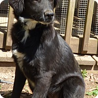 Adopt A Pet :: Tillie - Bedminster, NJ