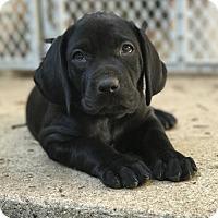 Adopt A Pet :: Furrrnando - Denton, TX