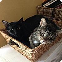 Adopt A Pet :: Susie - Chicago, IL