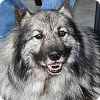 Adopt A Pet :: Oscar - Los Altos, CA