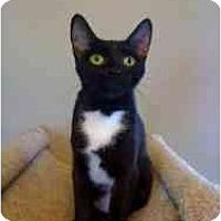 Adopt A Pet :: Macy - Milwaukee, WI