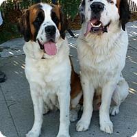Adopt A Pet :: Bobby - Bellflower, CA