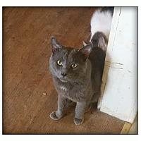 Adopt A Pet :: Oswin - london, ON