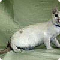 Adopt A Pet :: Radclyffe - Powell, OH