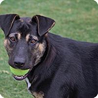 Adopt A Pet :: Harley - Pinehurst, NC
