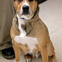 Adopt A Pet :: Rocco - Anderson, IN