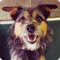 Adopt A Pet :: Kiwi - Lake Odessa, MI