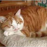 Adopt A Pet :: Gavroche - Pasadena, CA