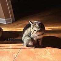 Adopt A Pet :: Castiel - Atlanta, GA