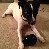 Adopt A Pet :: Waz - Wisconsin Dells, WI