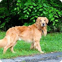 Adopt A Pet :: Rocco - Washington, DC