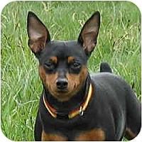 Adopt A Pet :: ROXIE - Springvale, ME