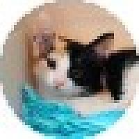 Adopt A Pet :: Callie - Ft. Lauderdale, FL