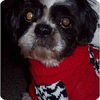 Adopt A Pet :: Jersey - Mays Landing, NJ