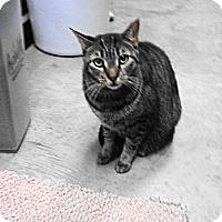 Adopt A Pet :: Jake - Warminster, PA