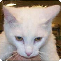 Adopt A Pet :: Clancy - Annapolis, MD