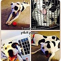 Adopt A Pet :: Lally and Luna - Bardonia, NY