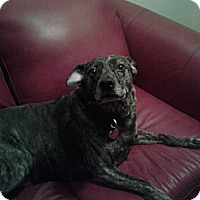 Adopt A Pet :: *Mazey - Winder, GA