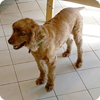 Adopt A Pet :: MATTY - Melbourne, FL