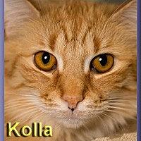 Adopt A Pet :: Kolla - Aldie, VA