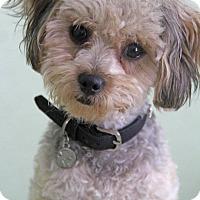 Adopt A Pet :: Bunny - Yuba City, CA