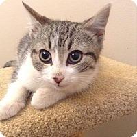 Adopt A Pet :: Sushi - Sunderland, ON