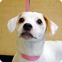 Adopt A Pet :: Buster - Weatherford, TX